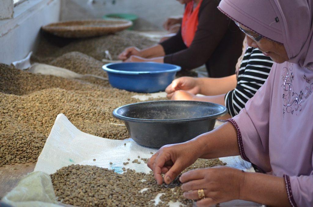 Selezione del caffè verdeSelezione del caffè verde