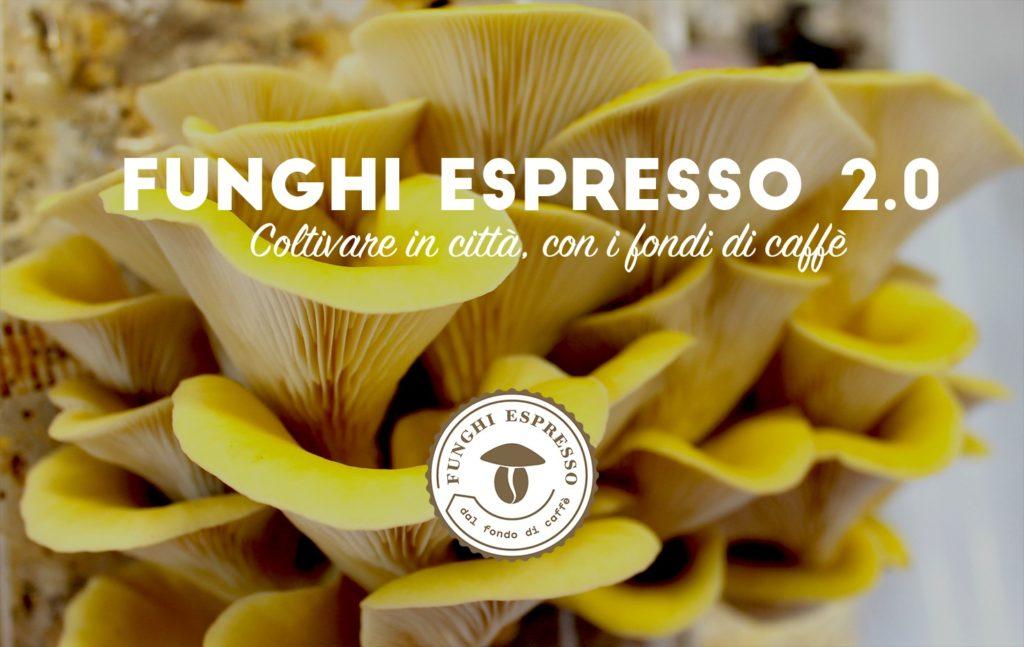 Funghi espresso