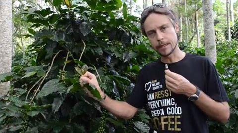 """IL CAFFE' COLTIVATO ALL'OMBRA, IN HONDURAS ALLA SCOPERTA DELLA PIANTAGIONE DI """"BARISTA & FARMER"""""""