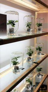 Pick a  plant, piante di caffè in bottiglia