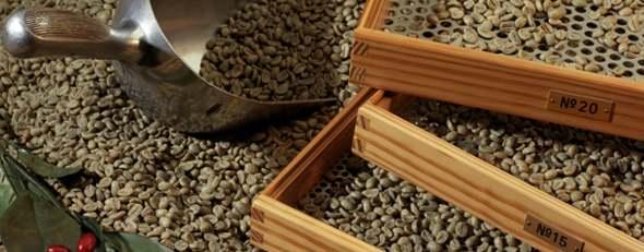 UN CORSO PROFESSIONALE SUL CAFFE' VERDE, A FIRENZE IL 10 OTTOBRE