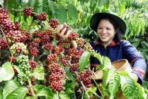 DIE LÄNDER DES KAFFEE - INDONESIEN