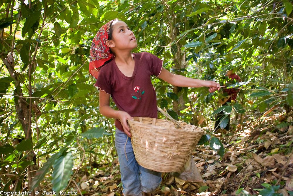 IL CAFFÈ A BUON MERCATO … È MOLTO A BUON MERCATO