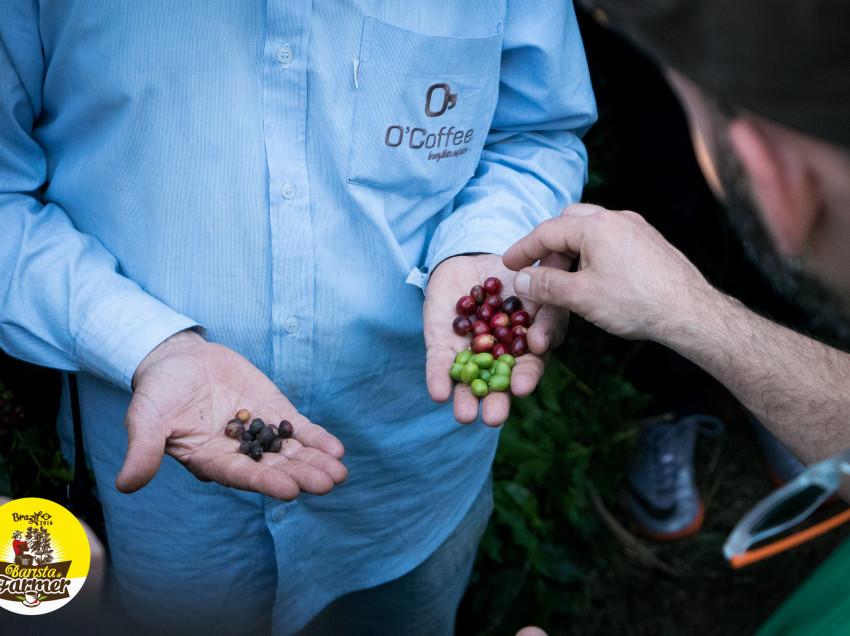"""BARISTA & FARMER, PRIMO GIORNO NELLE PIANTAGIONI DI """"O'COFFEE"""""""