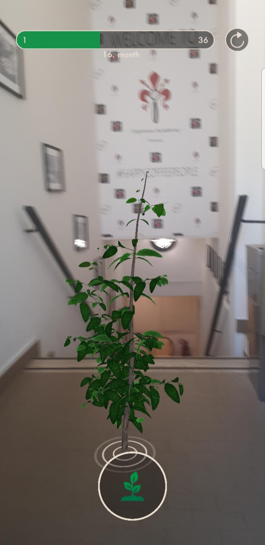 La pianta di caffè