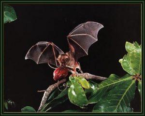 Bat Coffee il caffè dei pipistrelli
