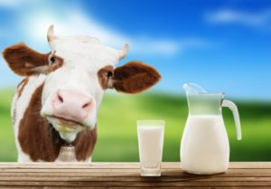 cow-and-a-jug-of-milk