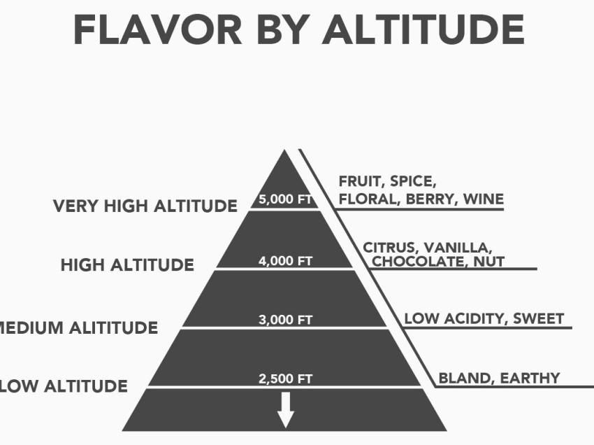 COME L'ALTITUDINE INFLUENZA GLI AROMI DEL CAFFE'
