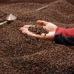 fresh-roasted-coffee