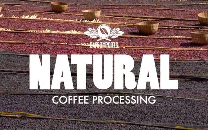 TUTTI I METODI DI LAVORAZIONE DEL CAFFE': IL METODO NATURALE