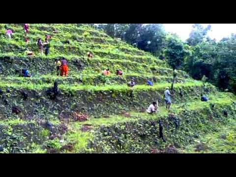 Piantagioni in Nepal