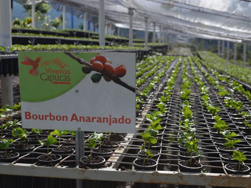 BARISTA E FARMER, UN DOCUMENTARIO SUL REALITY DEL CAFFE' IN HONDURAS