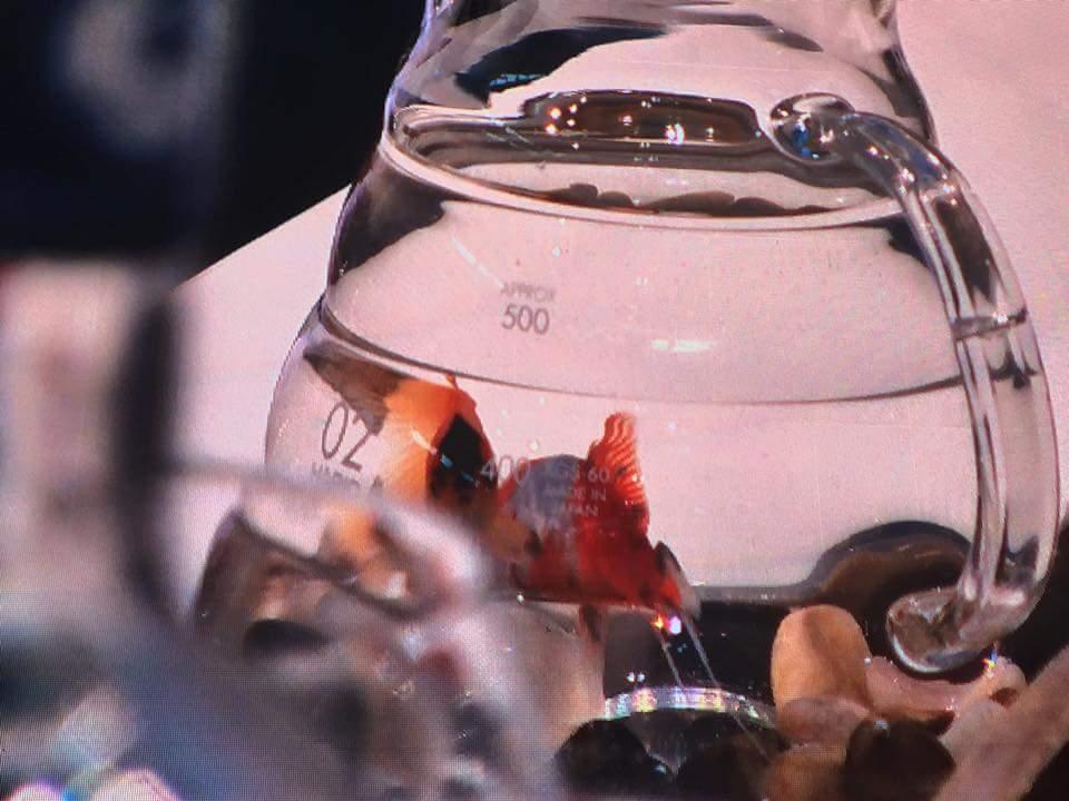 Il pesce....