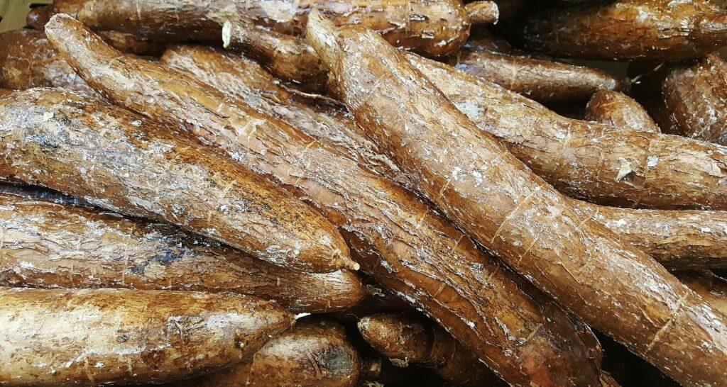 Radice di Manioca o Cassava dalla quale si ricava la Tapioca